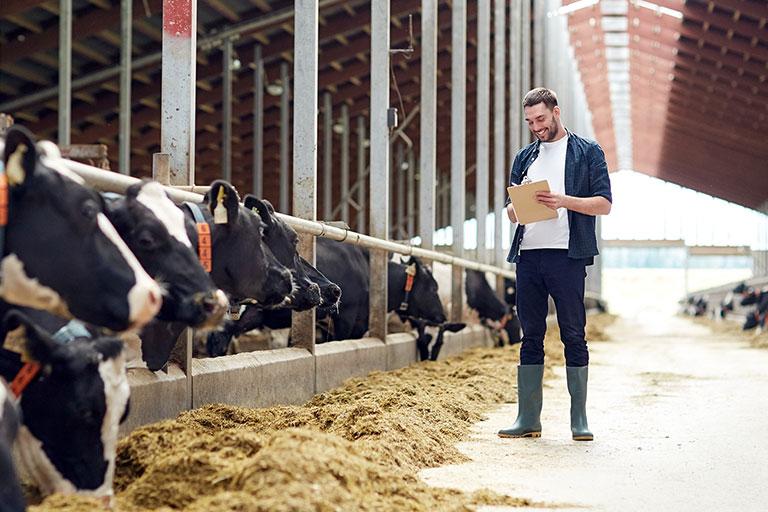 2020 Devlet Destekli Hayvancılık Kredisi Nasıl Alınır, Şartları Nelerdir?